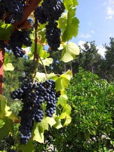 Абхазия частный сектор отдых без посредников на берегу моря цены на отдых в Гаграх