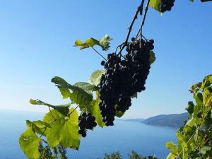Абхазия частный сектор Гагра отдых цены море