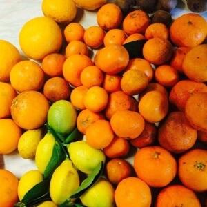Зимняя Абхазия фрукты