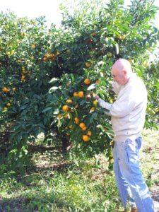 Сезонная работа в Абхазии