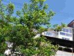 Абхазия частный сектор Гагра гостевой дом на берегу моря